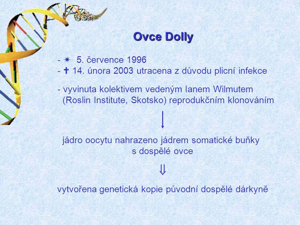 Ovce Dolly  5. července 1996.  14. února 2003 utracena z důvodu plicní infekce. vyvinuta kolektivem vedeným Ianem Wilmutem.