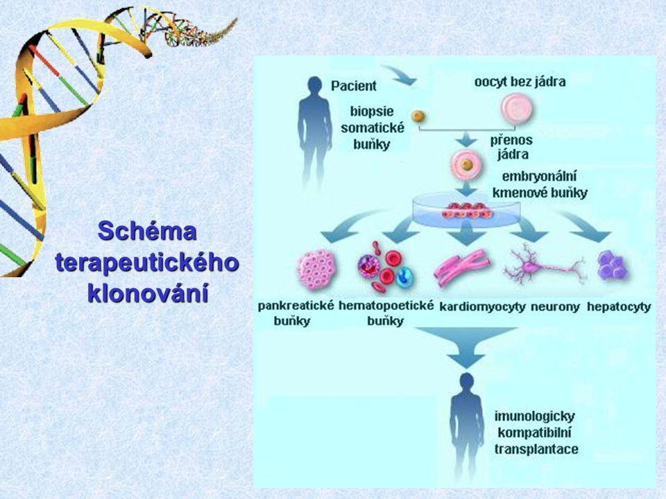 Schéma terapeutického klonování