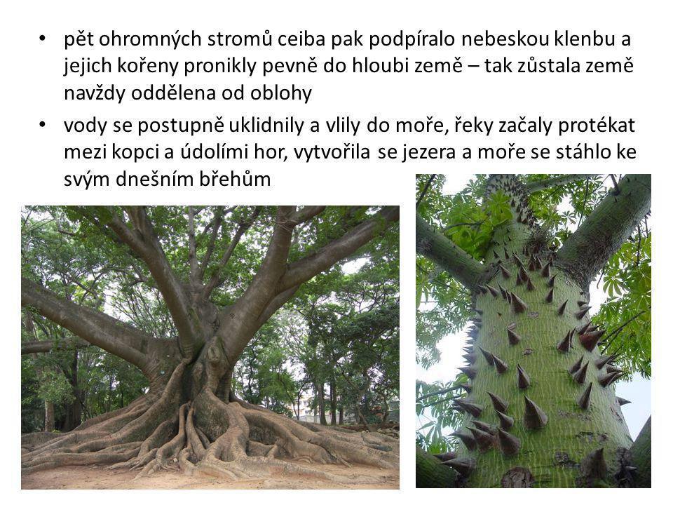 pět ohromných stromů ceiba pak podpíralo nebeskou klenbu a jejich kořeny pronikly pevně do hloubi země – tak zůstala země navždy oddělena od oblohy