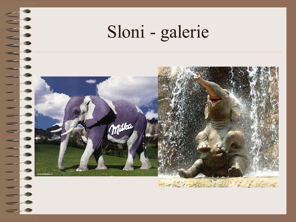 Sloni - galerie