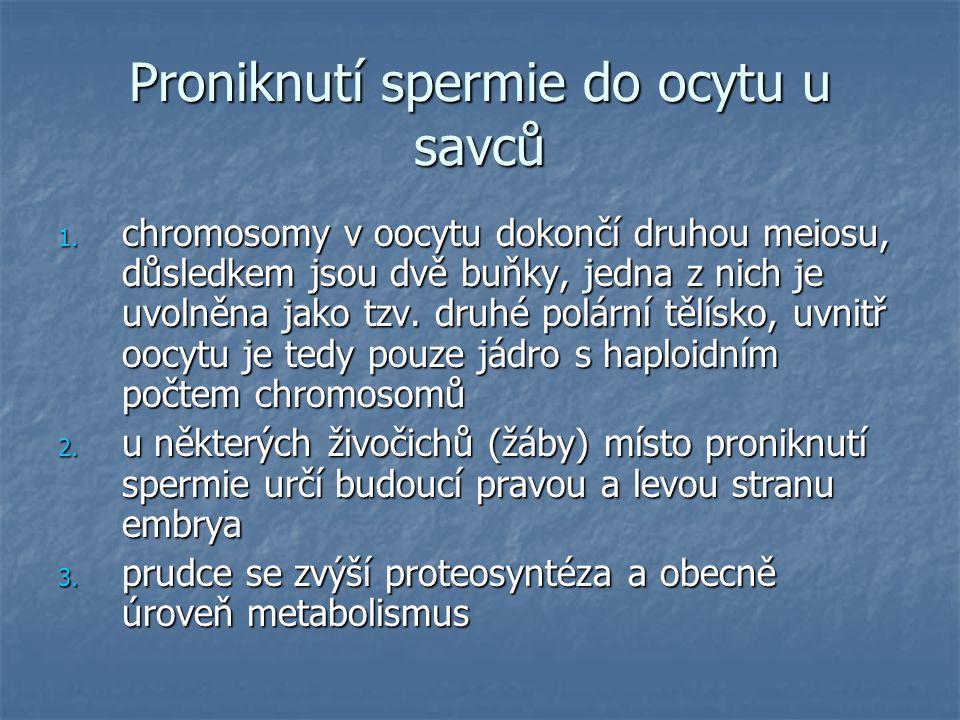 Proniknutí spermie do ocytu u savců