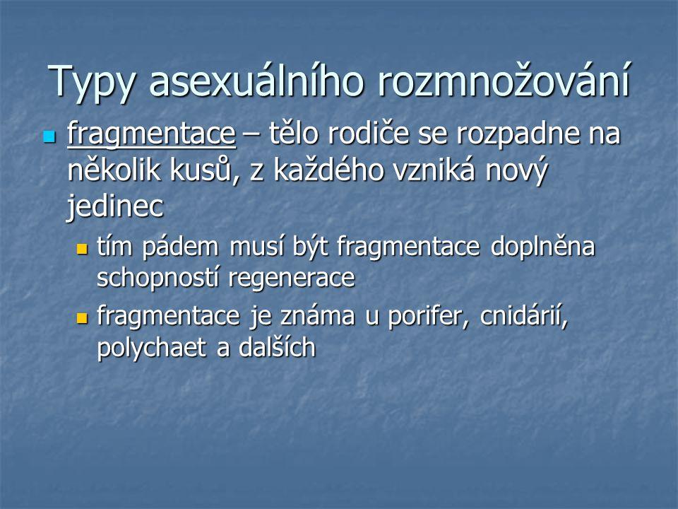 Typy asexuálního rozmnožování