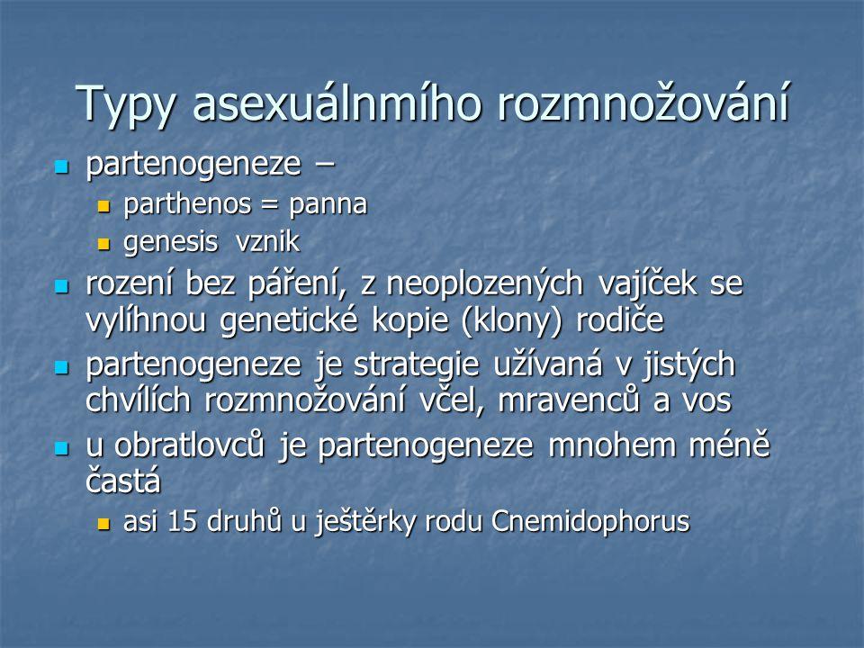 Typy asexuálnmího rozmnožování