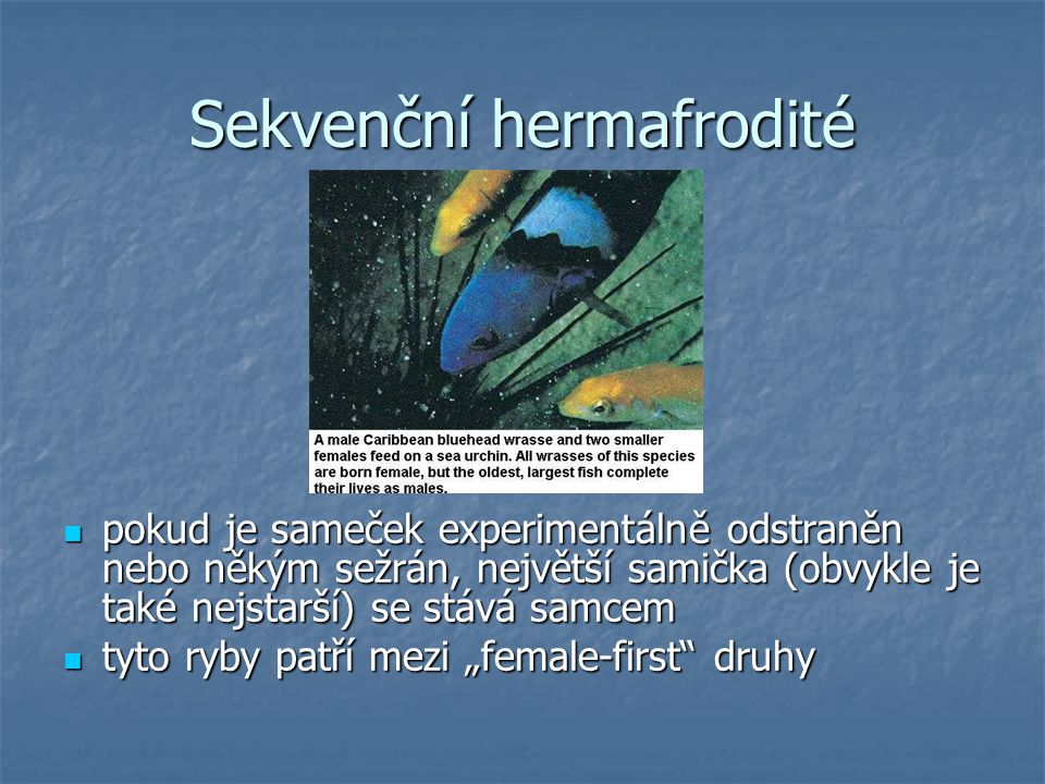 Sekvenční hermafrodité