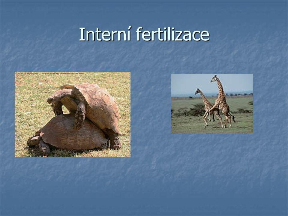 Interní fertilizace