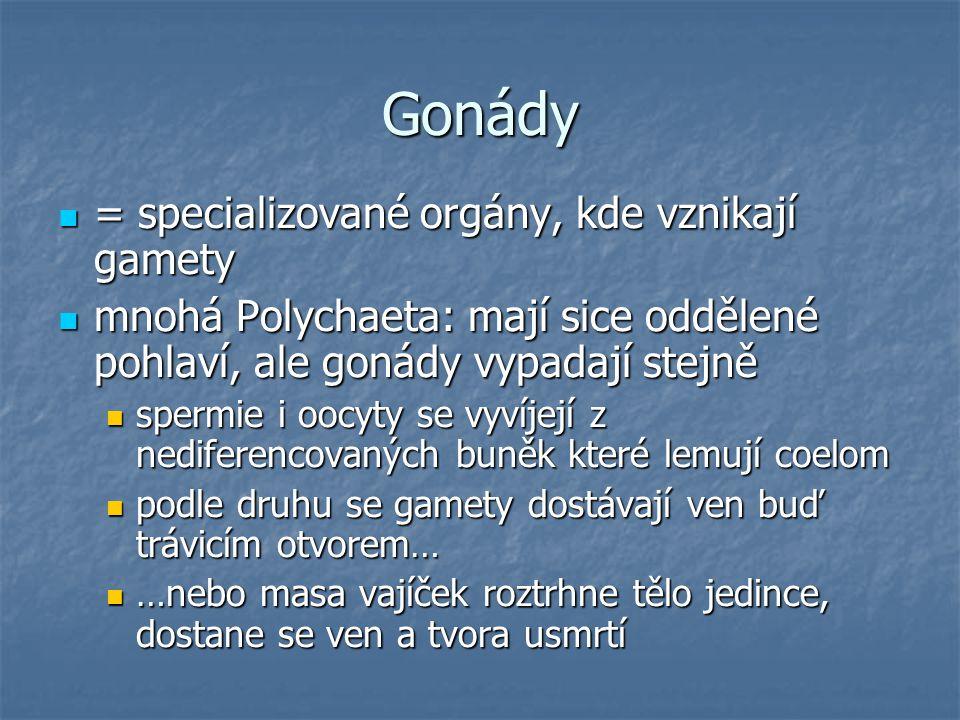 Gonády = specializované orgány, kde vznikají gamety