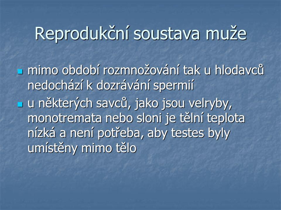 Reprodukční soustava muže