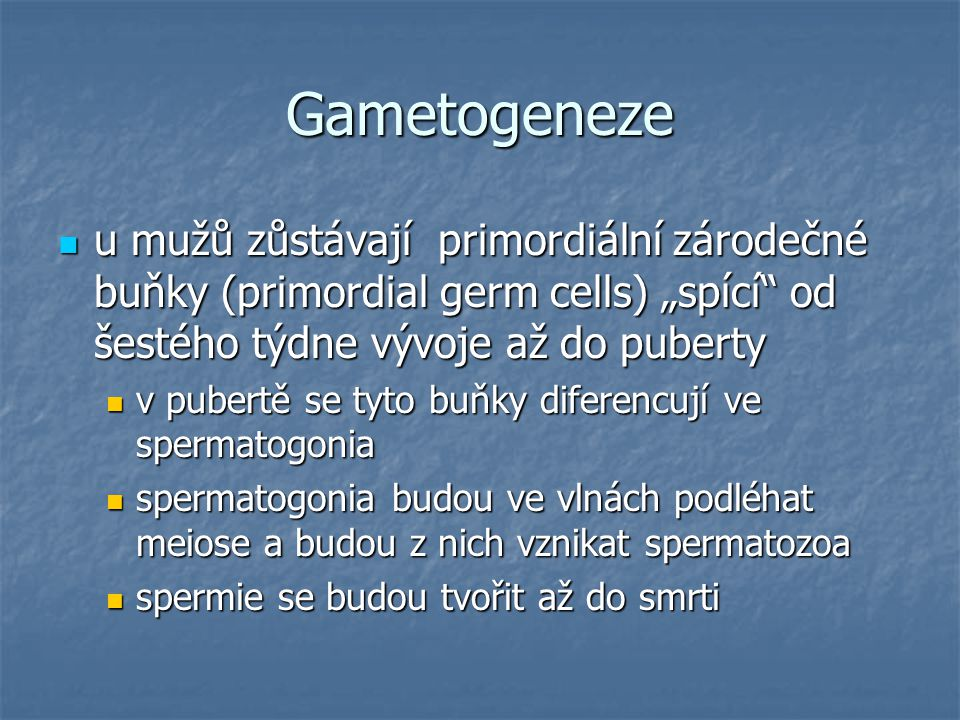 """Gametogeneze u mužů zůstávají primordiální zárodečné buňky (primordial germ cells) """"spící od šestého týdne vývoje až do puberty."""