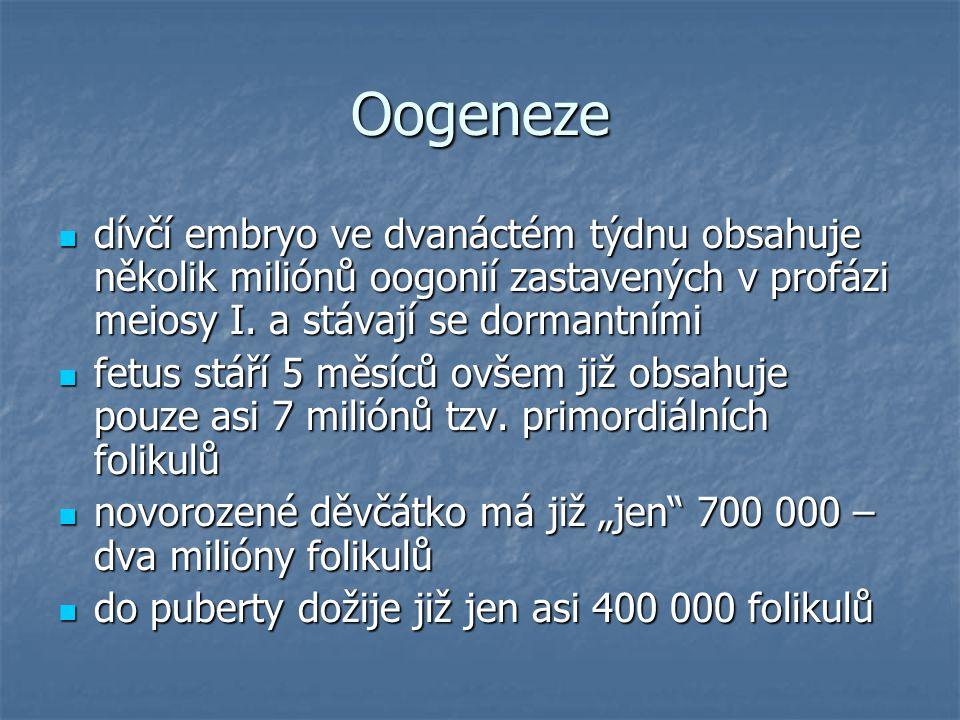 Oogeneze dívčí embryo ve dvanáctém týdnu obsahuje několik miliónů oogonií zastavených v profázi meiosy I. a stávají se dormantními.