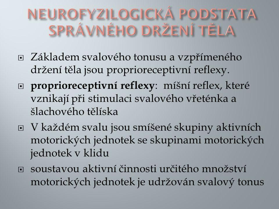 Neurofyzilogická podstata správného držení těla