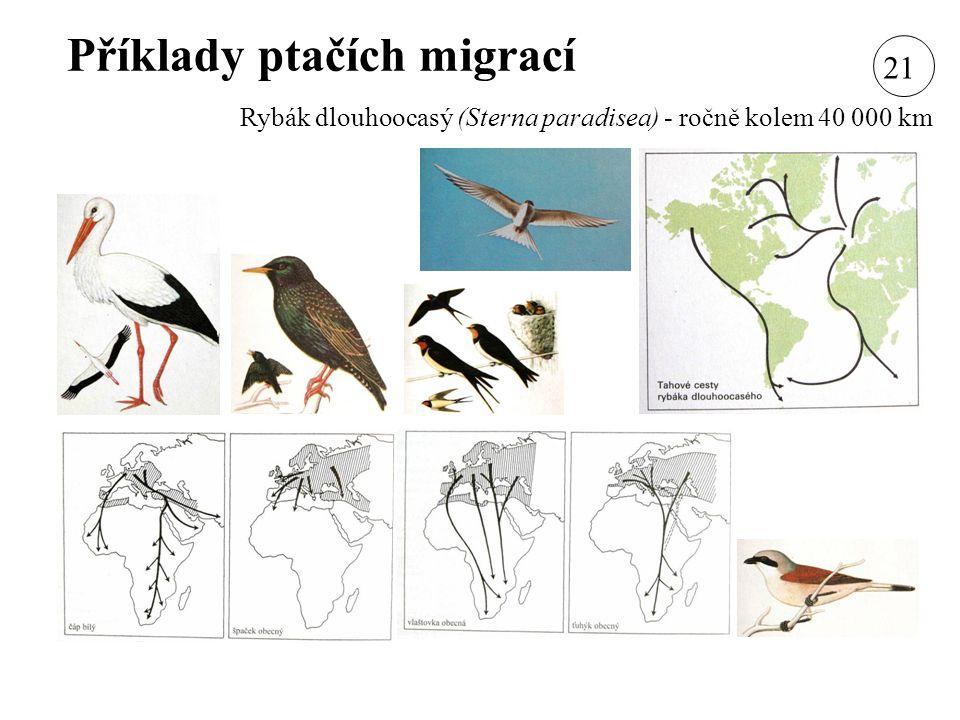 Příklady ptačích migrací