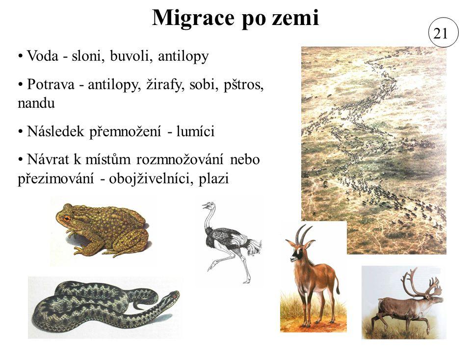 Migrace po zemi 21 Voda - sloni, buvoli, antilopy