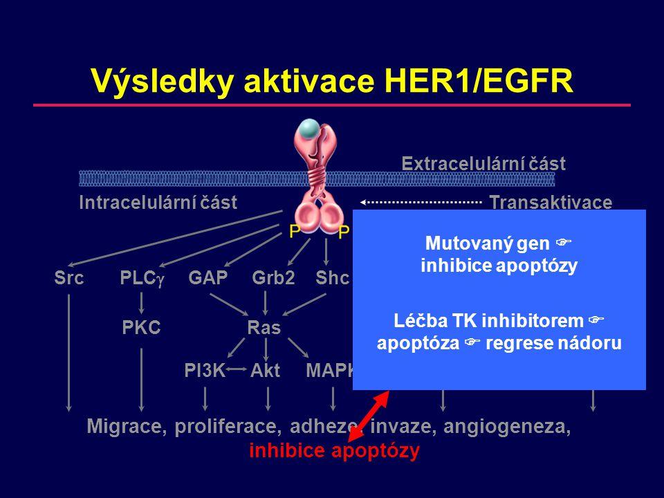 Výsledky aktivace HER1/EGFR