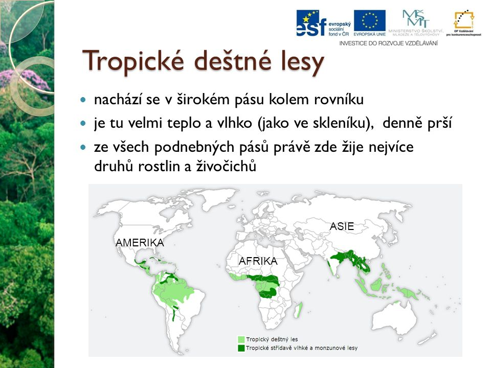 Tropické deštné lesy nachází se v širokém pásu kolem rovníku