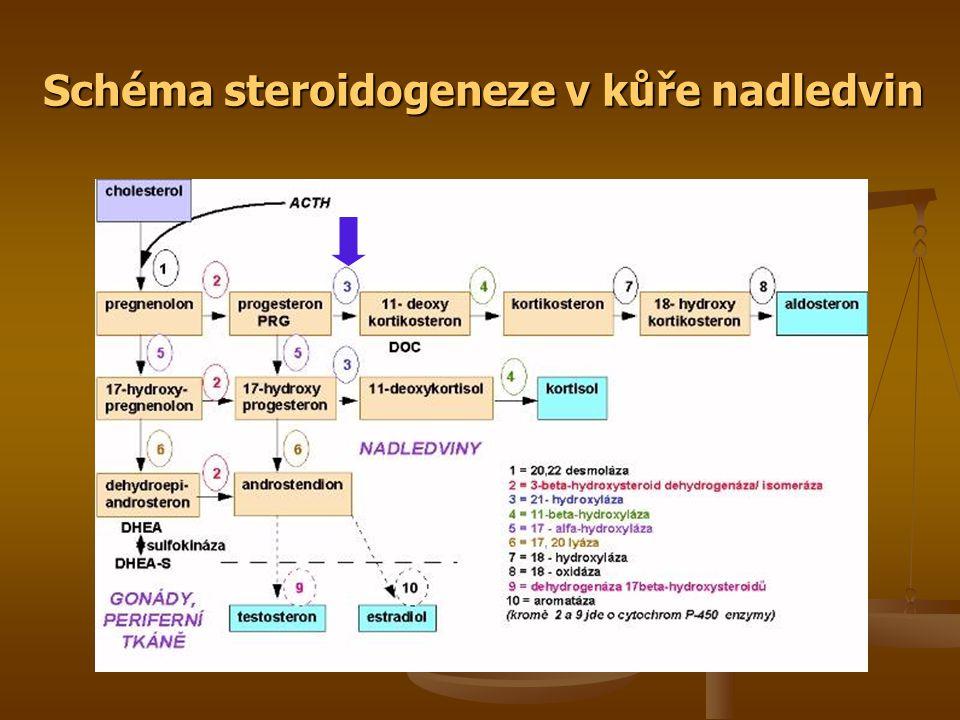 Schéma steroidogeneze v kůře nadledvin