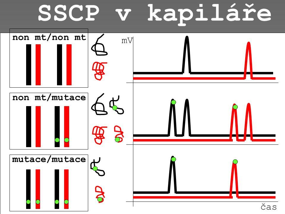 SSCP v kapiláře non mt/non mt mV non mt/mutace mutace/mutace čas