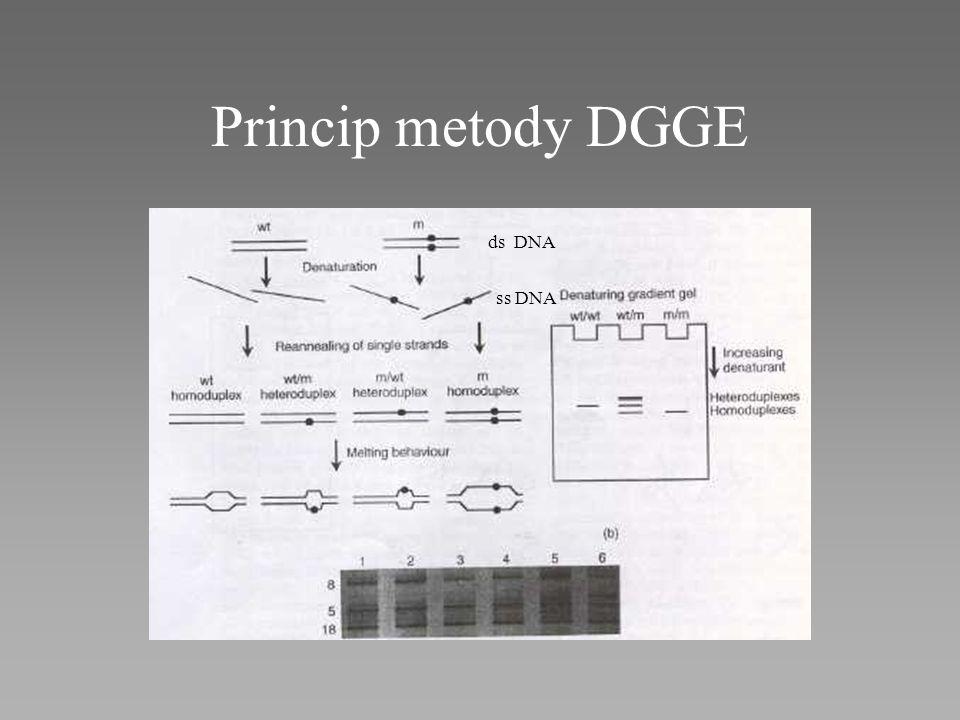 Princip metody DGGE ds DNA ss DNA