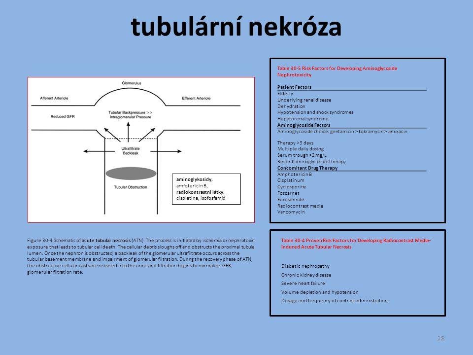 tubulární nekróza Table 30-5 Risk Factors for Developing Aminoglycoside Nephrotoxicity. Patient Factors.