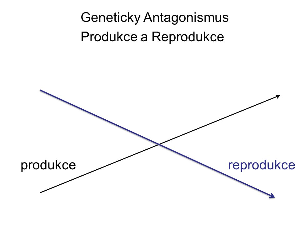 Geneticky Antagonismus