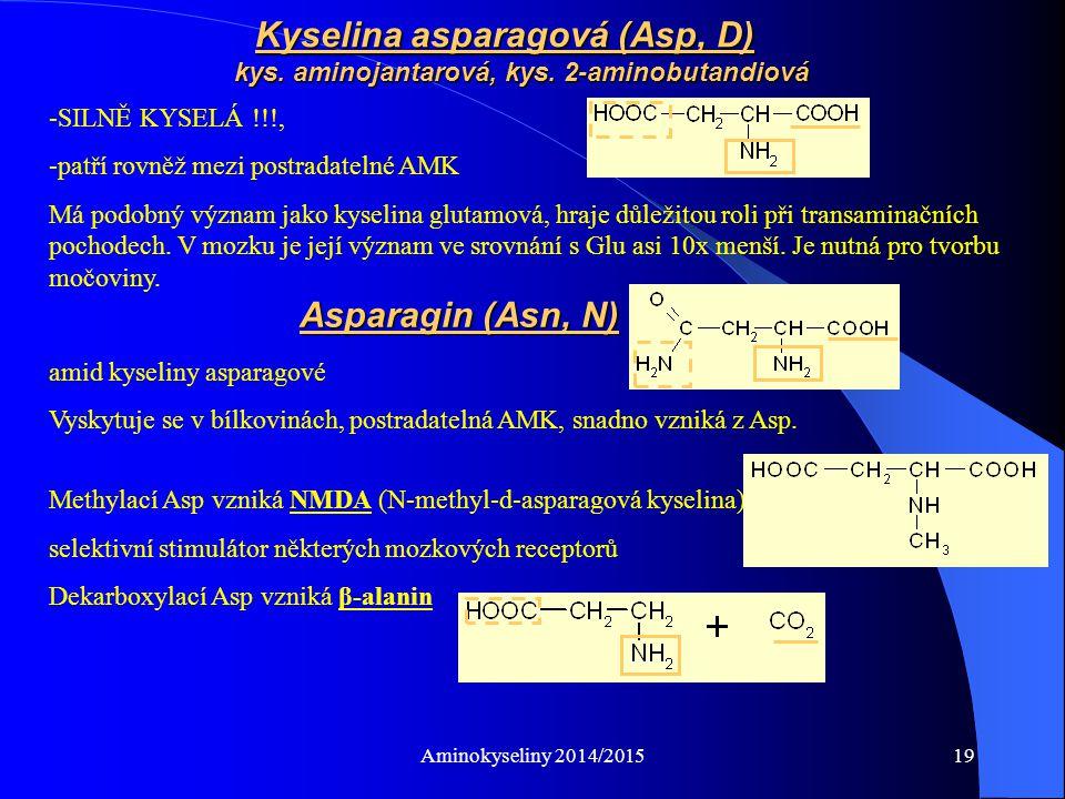 Kyselina asparagová (Asp, D). kys. aminojantarová, kys