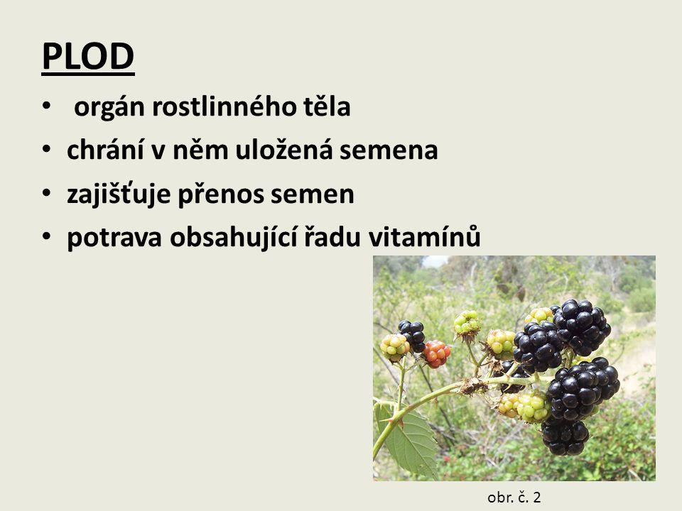 PLOD orgán rostlinného těla chrání v něm uložená semena
