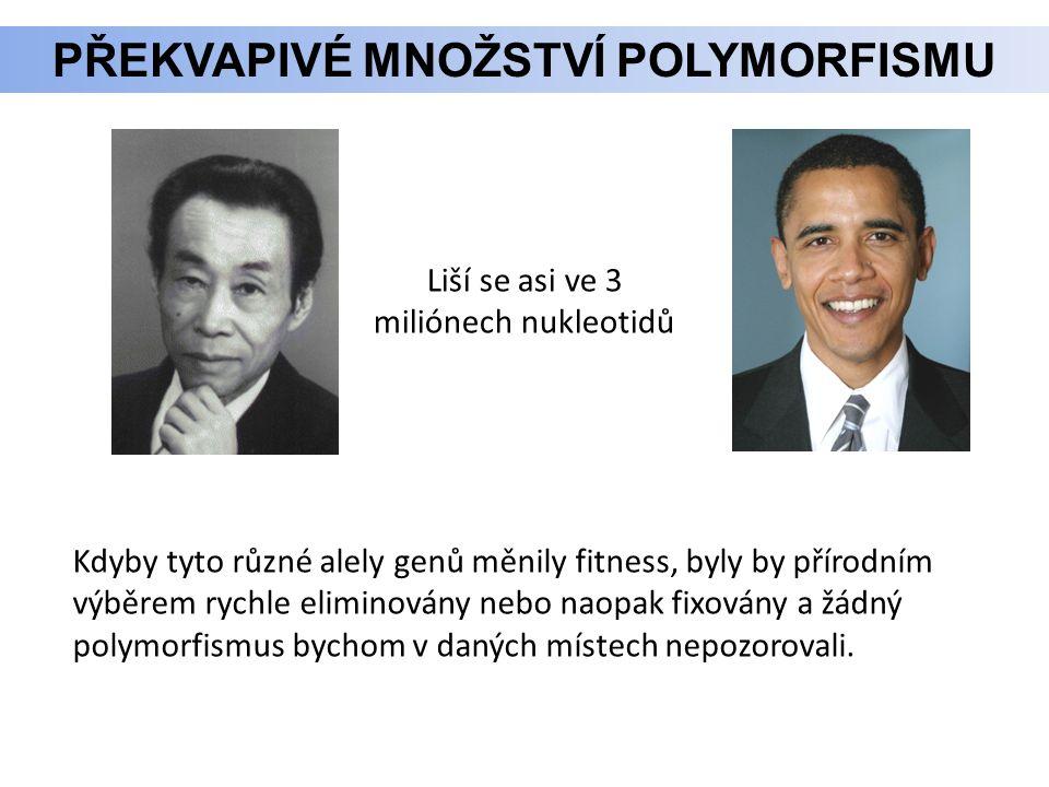 Překvapivé množství polymorfismu
