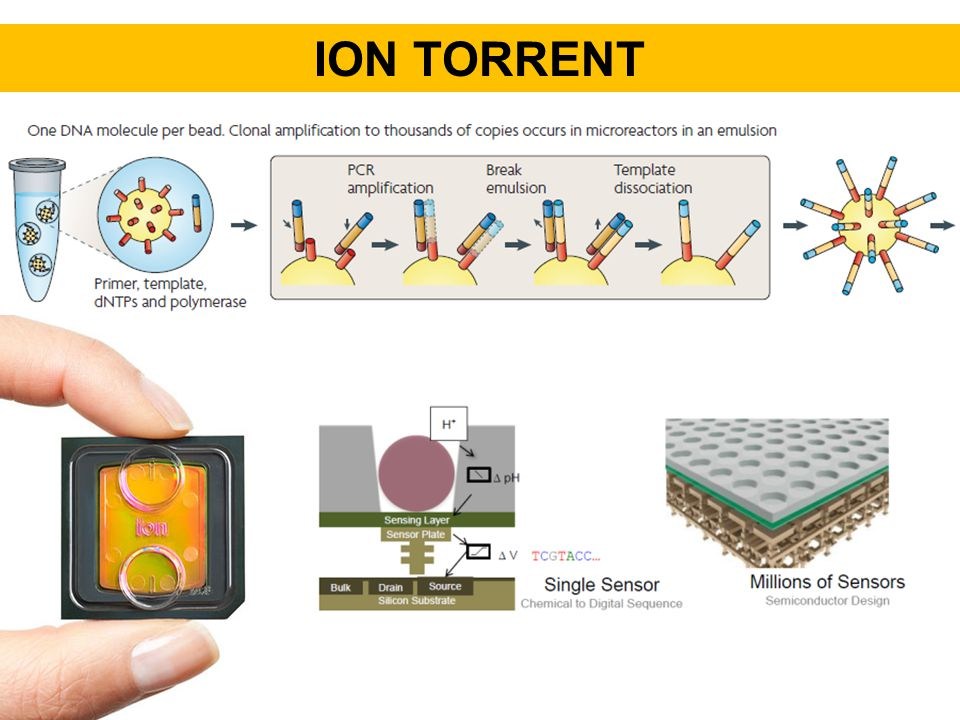 Ion torrent