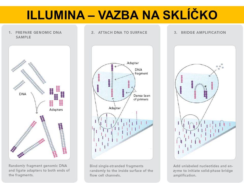 Illumina – vazba na sklíčko