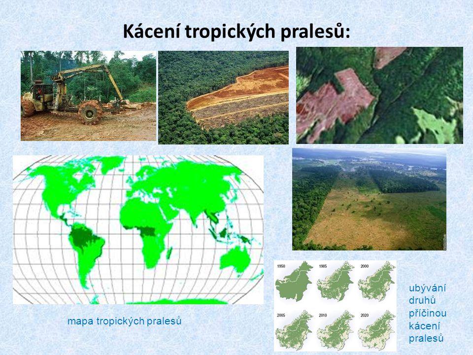 Kácení tropických pralesů: