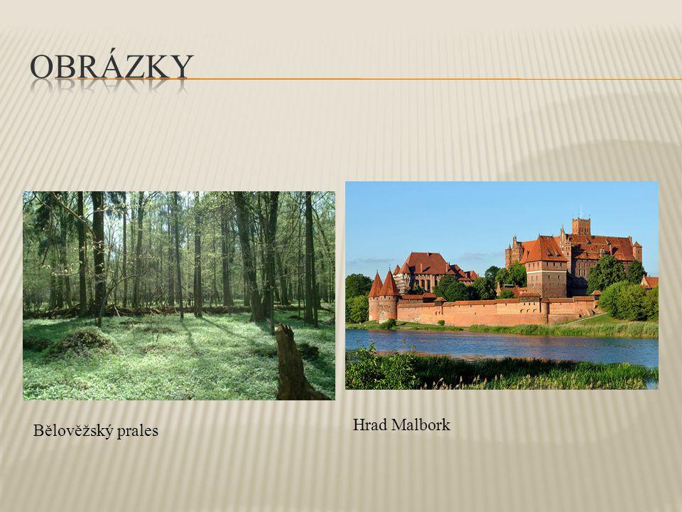 Obrázky Hrad Malbork Bělověžský prales