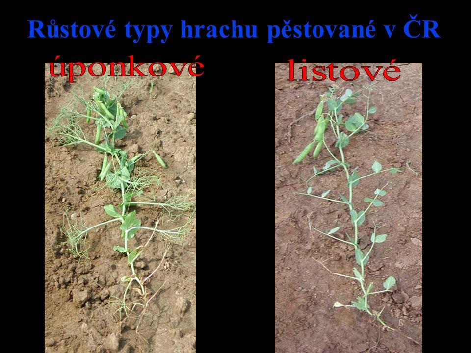 Růstové typy hrachu pěstované v ČR