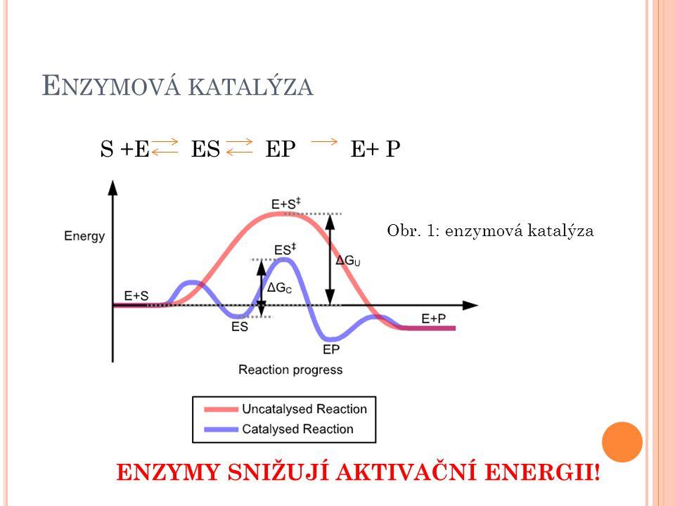Enzymová katalýza S +E ES EP E+ P ENZYMY SNIŽUJÍ AKTIVAČNÍ ENERGII!