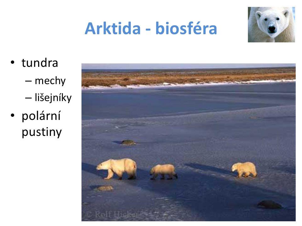 Arktida - biosféra tundra mechy lišejníky polární pustiny