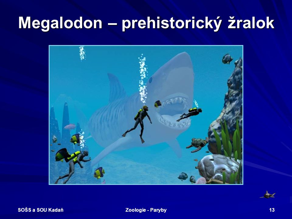 Megalodon – prehistorický žralok