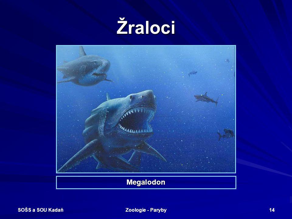 Žraloci Megalodon SOŠS a SOU Kadaň Zoologie - Paryby