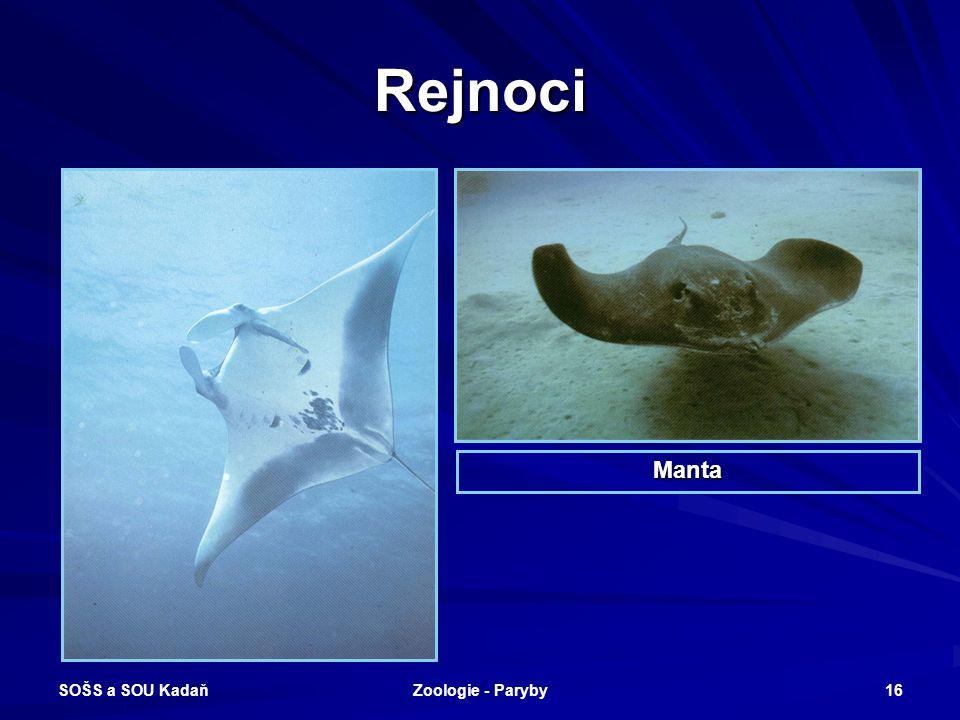 Rejnoci Manta SOŠS a SOU Kadaň Zoologie - Paryby