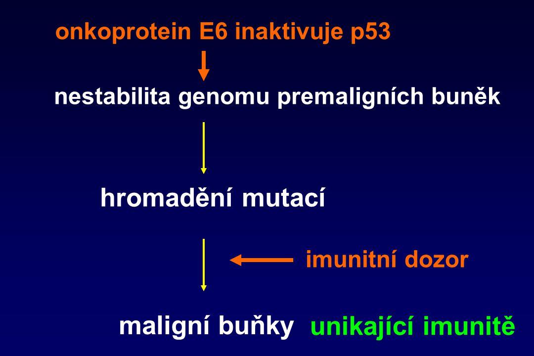 hromadění mutací maligní buňky unikající imunitě