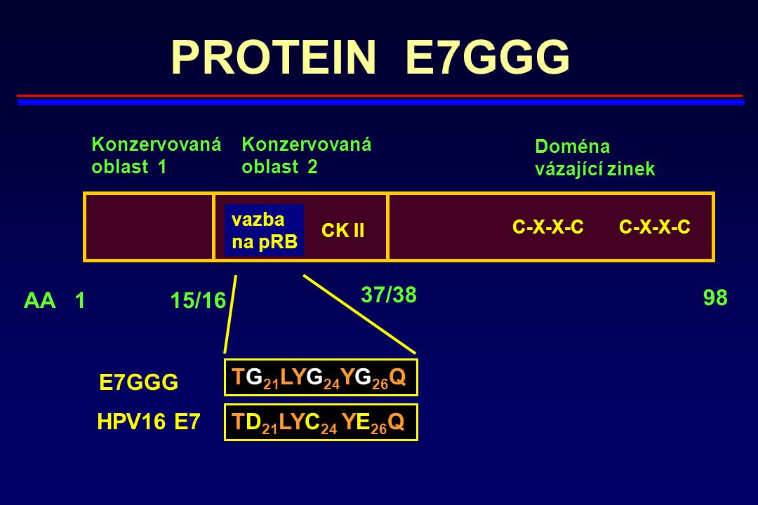 PROTEIN E7GGG 37/38 AA 1 15/16 98 TG21LYG24YG26Q E7GGG HPV16 E7