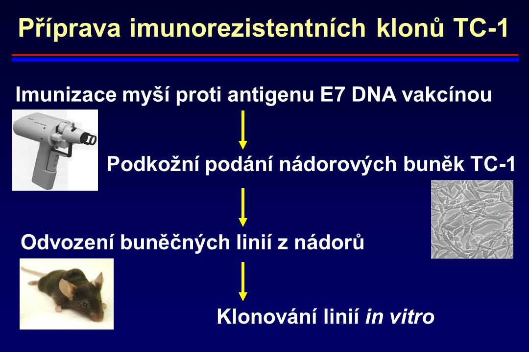 Příprava imunorezistentních klonů TC-1