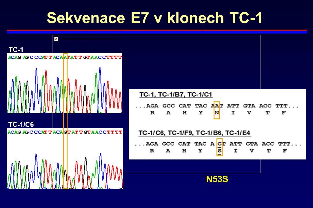 Sekvenace E7 v klonech TC-1