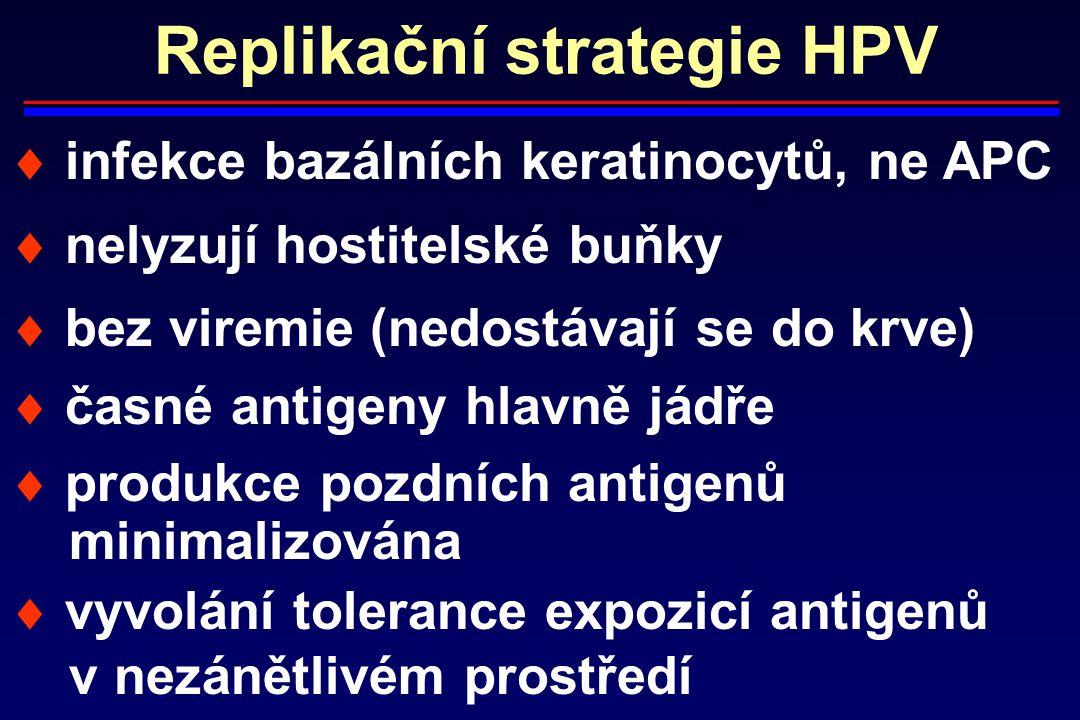 Replikační strategie HPV