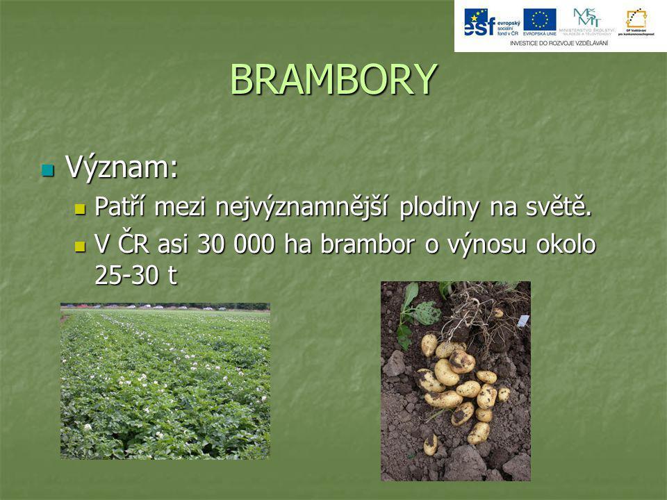 BRAMBORY Význam: Patří mezi nejvýznamnější plodiny na světě.