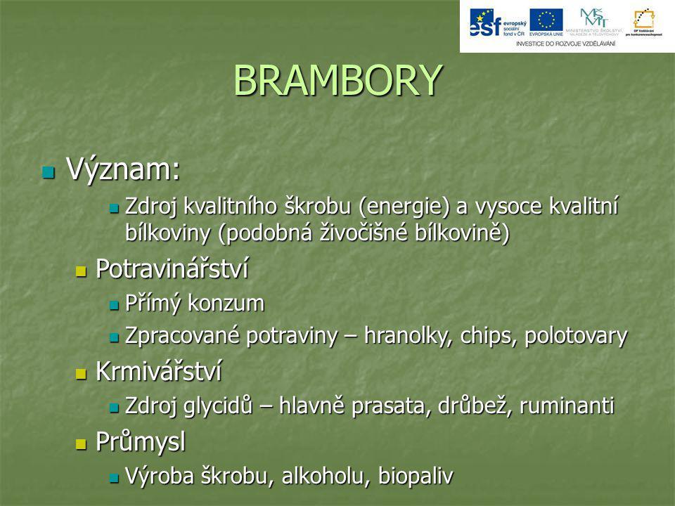 BRAMBORY Význam: Potravinářství Krmivářství Průmysl