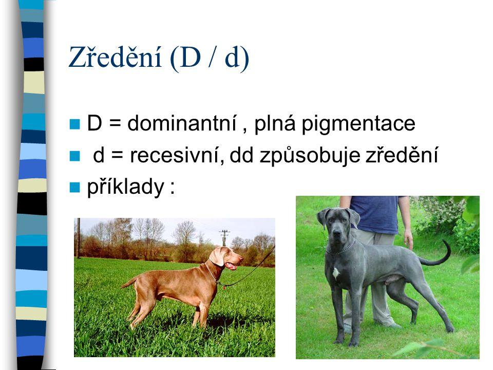 Zředění (D / d) D = dominantní , plná pigmentace