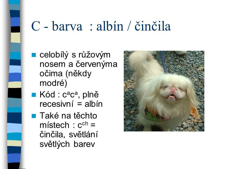 C - barva : albín / činčila