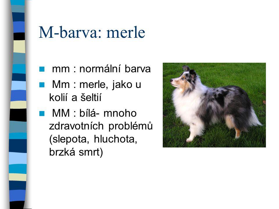 M-barva: merle mm : normální barva Mm : merle, jako u kolií a šeltií