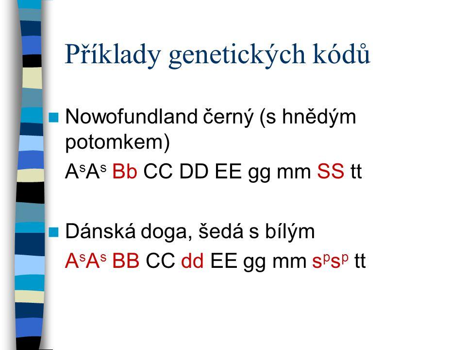 Příklady genetických kódů