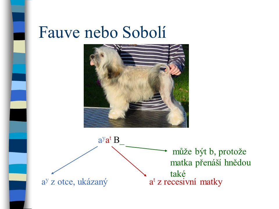 Fauve nebo Sobolí ayat B_