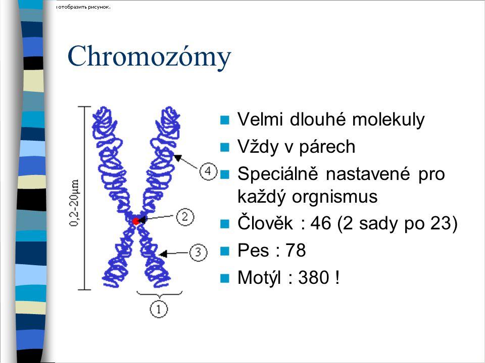 Chromozómy Velmi dlouhé molekuly Vždy v párech