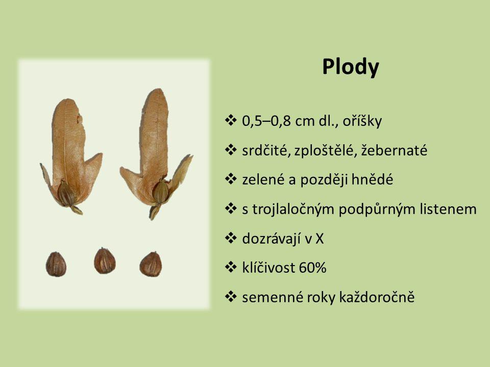 Plody 0,5–0,8 cm dl., oříšky srdčité, zploštělé, žebernaté